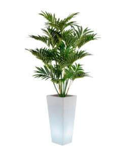noleggio pianta palma e vaso y-pot luminoso